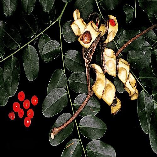 Adenanthera Pavonina или Аденантера Павлинья (семена)