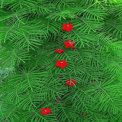 Ipomoea Quamoclit RED или Ипомея Квамоклит (семена)