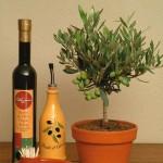 Olea Europaea или Олива Европейская