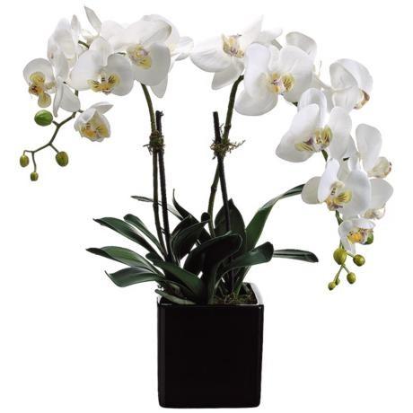 Phalaenopsis WHITE или Фаленопсис Белый (семена)