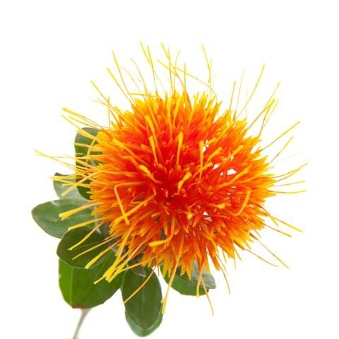 Safflower или Дикий Шафран (семена)