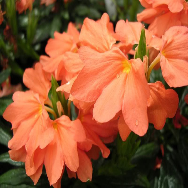 Rakita flowers  продажа цветов оптом и в розницу Самара