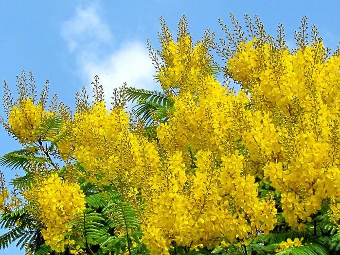 Травы с желтыми цветами название