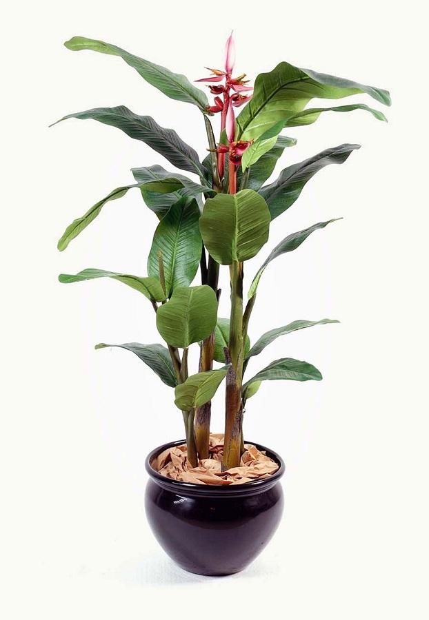 Растение Вырасти дерево Розмарин zk-036