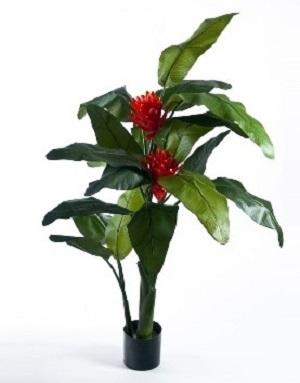Musa COCCINEA или Банан Ярко-Красный